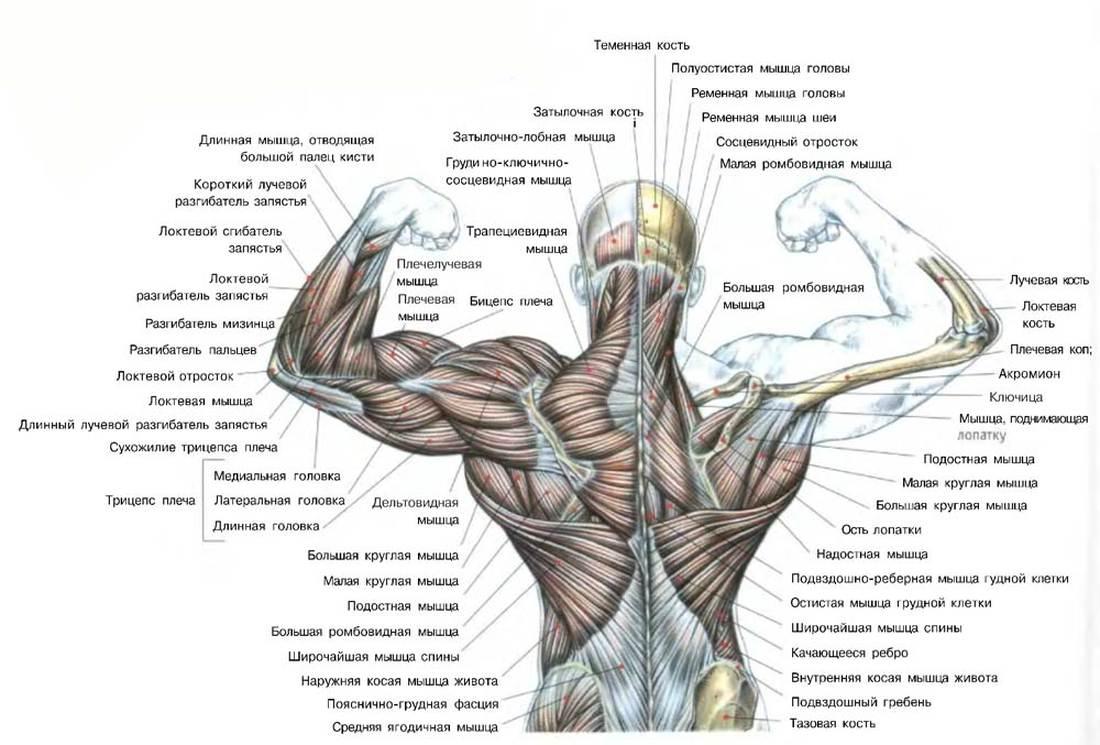 комплекс упражнений для сжигания жира на животе